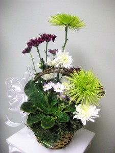 Plant and Flower Arrangement